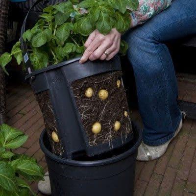 Kartoffelpotter letter arbejdet