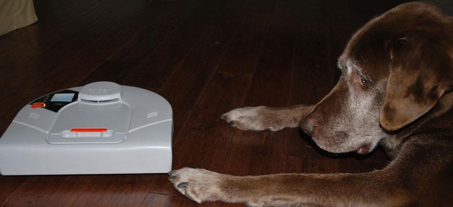 Hund kigger på Neato robotstøvsuger
