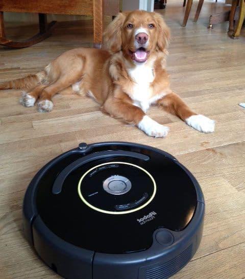 Roomba robotstøvsuger og hundehår