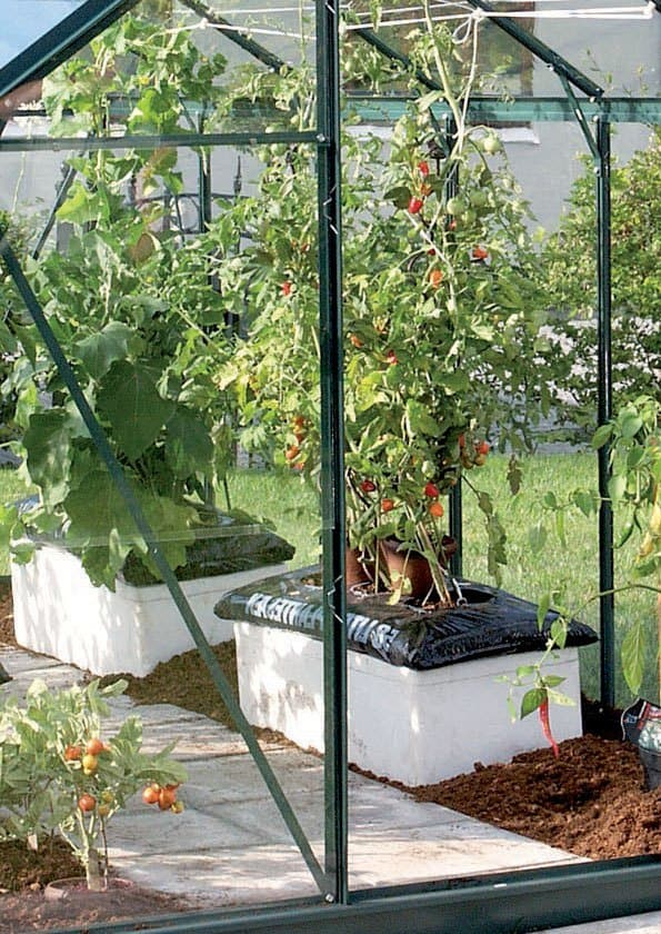 Venus drivhus tomatplanter