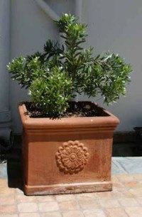 Italienske krukker - Keramik og terracotta fra Italien