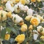 Langeskov planteskoles haver