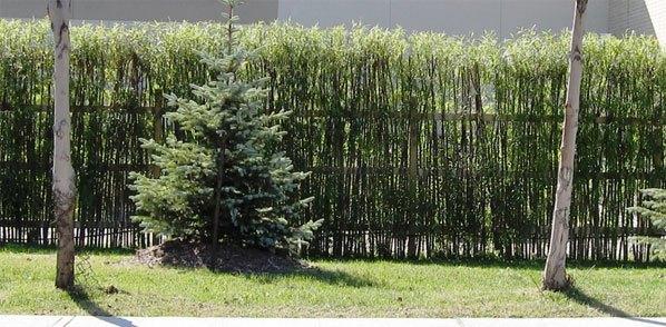 Læhegn   træ eller levende hegn til terrassen