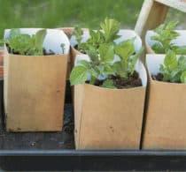 PlantStart Kartoffelsæt