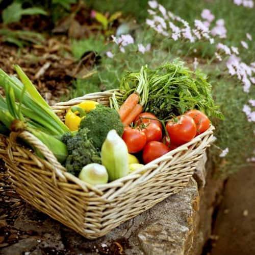 Mange grøntsager har gavn af epsom salt